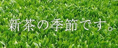 2013年の新茶